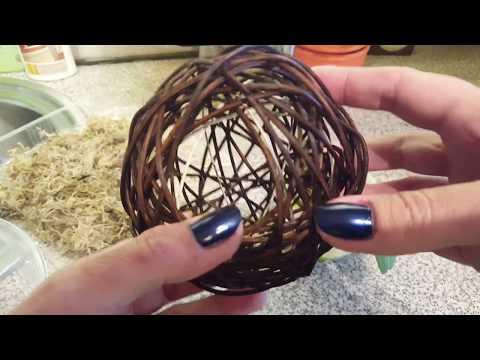 Пересадка детки фаленопсиса в гнездо ;)
