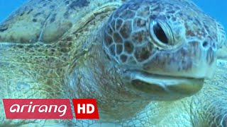 Arirang Special(Ep.328) Desert Seas _ Full Episode