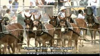 2 20 Mule Teams.mov