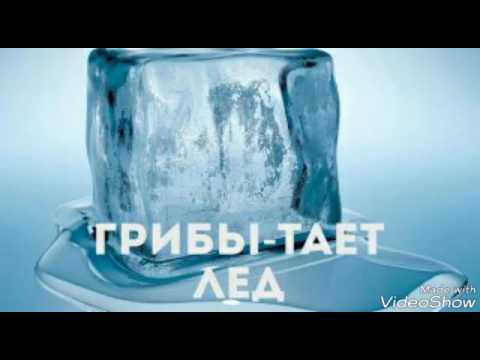 Грибы Тает Лёд