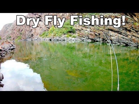 Gunnison River Wild Trout