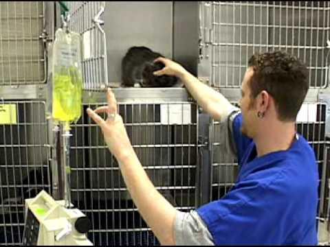 Veterinarians Jobs Made Real