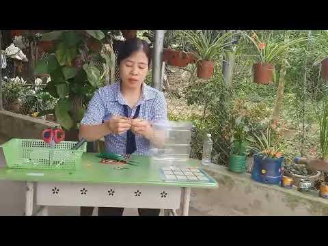 Cô Nam lớp 3TB - Chia sẻ cách làm chậu hoa mi ni bằng nguyên vật liệu phế thải