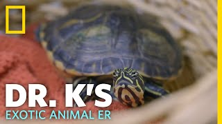 A Turtle with Shell Rot | Dr. K's Exotic Animal ER