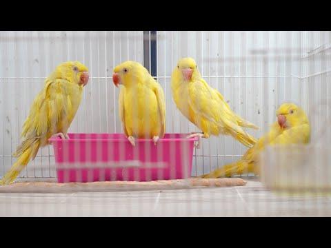 كيف تغيرت أنواع الطيور خلال ٤٠ عاماً ؟