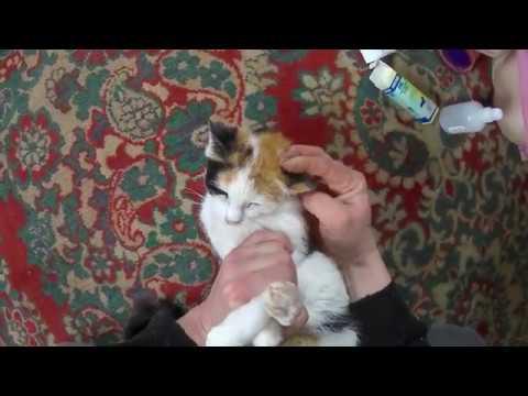 Лечим кошке уши//Ушная чесотка(Отодектоз)//Жизнь в деревне