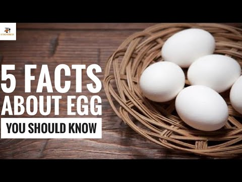 Egg facts | 5 Interesting facts about egg you should know | Food Facts