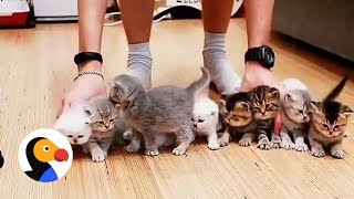 Adorable Kittens Wont Sit Still For This Picture | The Dodo