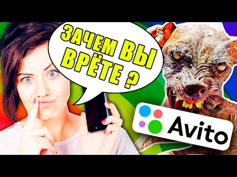 ЗВОНЮ МОШЕННИКАМ С AVITO Собаки