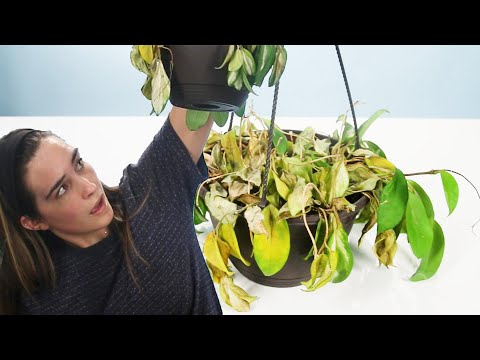 , title : 'How To Revive Your Dying Plants