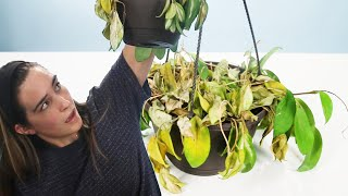 How To Revive Your Dying Plants