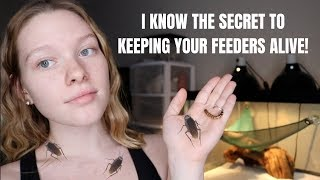How to PROPERLY Care for Feeder Insects!   THEY WILL NOT DIE ANYMORE!