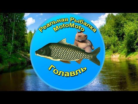 Как поймать Голавля на Лесной реке [NEW] | Реальная Рыбалка