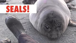 Breed All About It: Seals