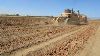 Soil Ripping For Walnut Trees