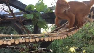 My Cat Enclosure