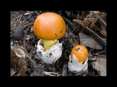 Gocce efficaci per unghie da un fungo