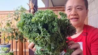 羽衣甘蓝Kale 最好的蔬菜  简单好吃做法  健康减肥羽衣甘蓝鸡肉丸 赶紧收藏『Eng Sub』Steamed kale chicken meatballs【田园时光美食2019 067】