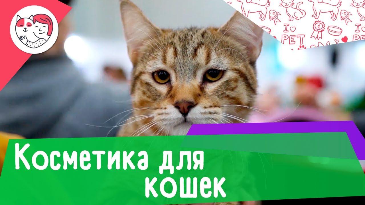4 популярных вопроса про косметику для кошек