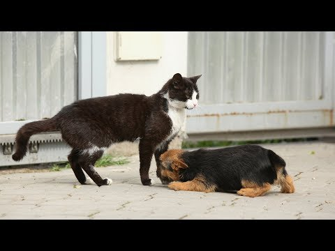 Cats meeting puppies for the first time – CUTE!