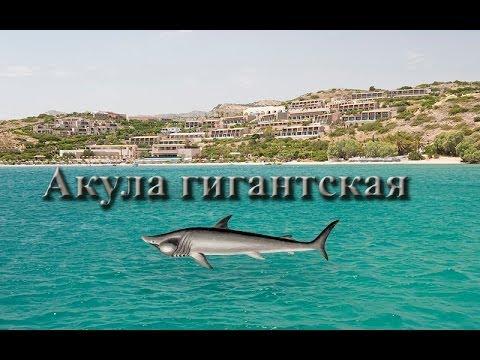Русская Рыбалка 3.9 Акула гигантская