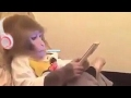 Kelakuan Monyet gokil abis Bikin ngakak