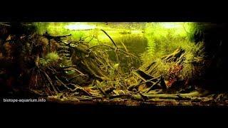 Akwarium biotopowe - Ameryka Południowa (inspiracja)