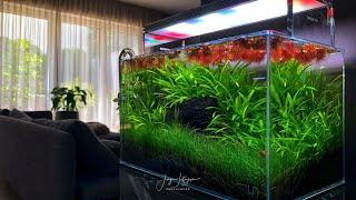Nano akwarium z Phyllanthus fluitans