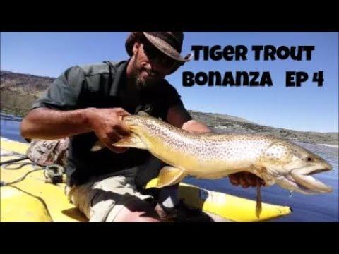 Tiger Trout Bonanza Episode 4