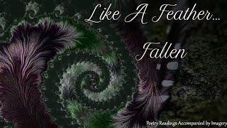 Like A Feather Fallen
