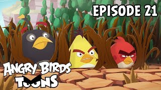 Angry Birds Toons | Eating Out   S2 Ep21