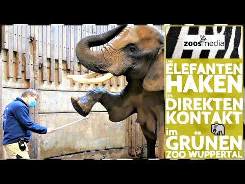 Film von Zoos.media: Der Elefantenhaken im direkten Kontakt