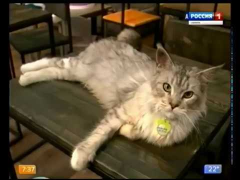 Самарцы отмечают Всемирный день кошек