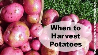 When NOT to Harvest Potatoes