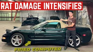 RATS Destroyed SO MUCH MORE Of My CHEAP Corvette *This Is Gonna Be Expensive*