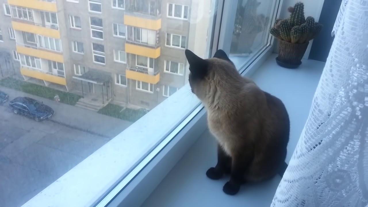 Хозяин снимал своего кота, когда тот превратился в настоящего монстра. Что на него нашло?
