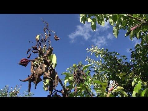 Mula sa kuko halamang-singaw bahay