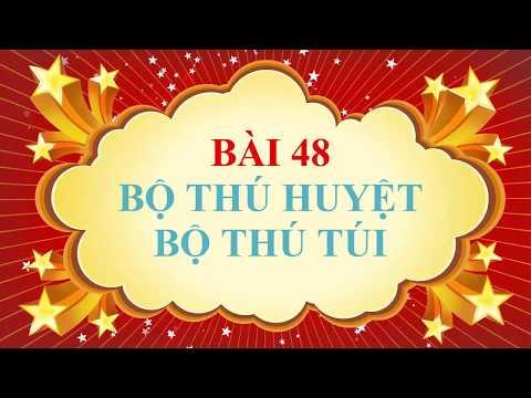 SINH 7-CHỦ ĐỀ: ĐA DẠNG CỦA LỚP THÚ ( TIẾT 1)- pHẦN A. BỘ THÚ HUYỆT, BỘ THÚ TÚI ( video clip)