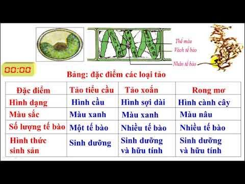 SINH HOC 6 - GIÁO ÁN MẪU BÀI 37 NHÓM SINH