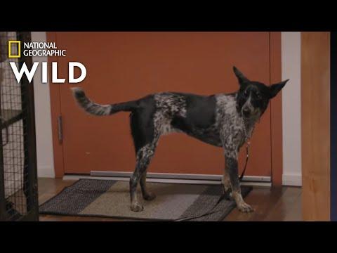 The Affection Junkie Dog | Dog: Impossible