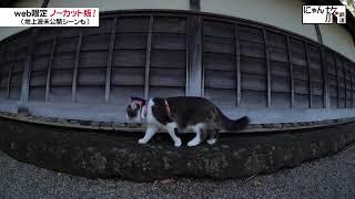 Vol.39「にゃん旅鉄道」観光地の視察にゃ!②