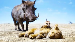 "THE LION KING ""Pumbaa, Timon & Simba"" Clip"