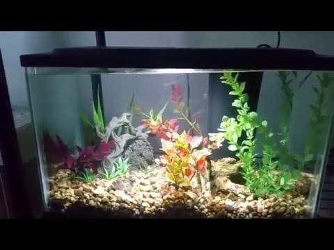 5 gallon aquaculture aquarium kit review