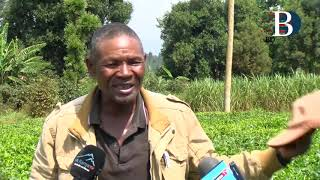 KTDA accused of using faulty weights to fleece farmers