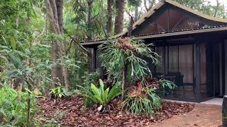 Rainforest Thunderstorm Sounds on a Tin Roof   Rolling Thunder & Rain Sounds for Relaxing & Sleep