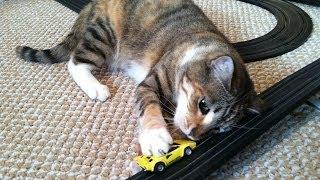 Cat Chasing Tyco Slot Cars