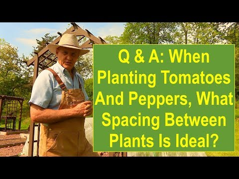 , title : 'Q & A: When Planting Tomatoes and Peppers, What Spacing Between Plants is Ideal?'