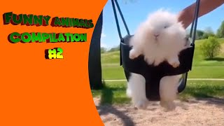 FUNNY ANIMALS COMPILATION #2 | TRY NOT TO LAUGH PETS FAILS