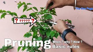 Pruning plants, Best time to do pruning, why pruning is important for plants