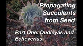 Propagating Succulents by Seed, Part One